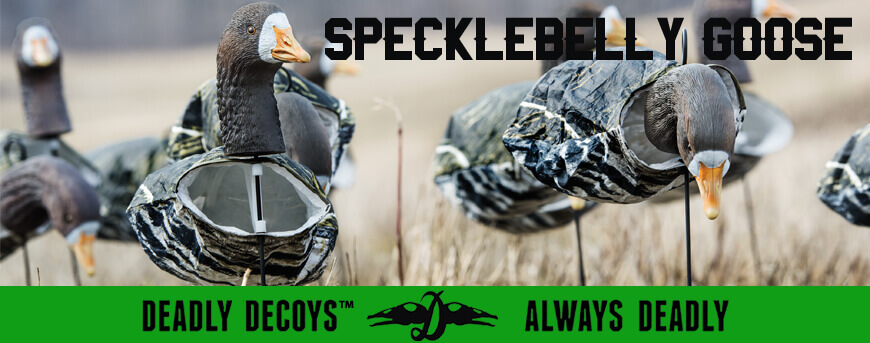 Category Image for Specklebelly Goose Decoys